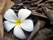 Fiore fresco Fotografia Stock Libera da Diritti