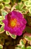 Fiore fresco immagini stock libere da diritti