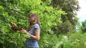 Fiore fresco del tiglio della giovane scelta dell'erborista in parco al giorno di estate 4K stock footage
