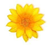 Fiore fresco giallo fotografie stock libere da diritti