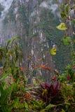 Fiore fucsia di boliviana su Inca Trail a Machu Picchu nel Perù Immagini Stock Libere da Diritti