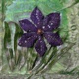 Fiore ghiacciato della clematide Immagine Stock Libera da Diritti