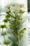Fiore in ghiaccio Fotografie Stock