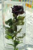 Fiore in ghiaccio Fotografia Stock Libera da Diritti