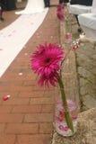 Fiore giù la navata laterale Immagini Stock Libere da Diritti