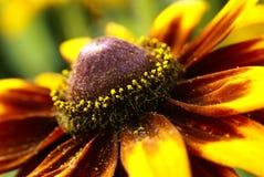 Fiore giallo 4 Immagini Stock