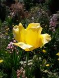 Fiore giallo Immagini Stock