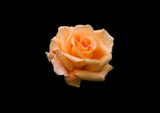 Fiore giallo fotografie stock libere da diritti