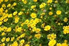 Fiore giallo alto chiuso immagini stock