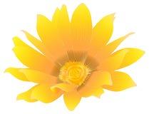 Fiore giallo arancione Fotografia Stock