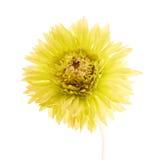 Fiore giallo artificiale isolato Immagini Stock Libere da Diritti