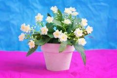 Fiore giallo-chiaro artificiale della primula (primaverina) in un vaso da fiori ceramico Fotografie Stock