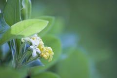 Fiore giallo con cenni storici verdi fotografia stock