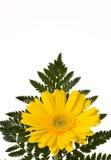 Fiore giallo con la felce Fotografie Stock