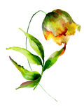 Fiore giallo dei tulipani Fotografia Stock Libera da Diritti