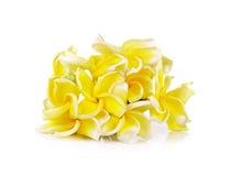 Fiore giallo del frangipane isolato sui precedenti bianchi Fotografia Stock Libera da Diritti