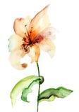 Fiore giallo del giglio Fotografia Stock Libera da Diritti