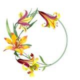 Fiore giallo del giglio dell'acquerello Fiore botanico floreale Quadrato dell'ornamento del confine della pagina illustrazione vettoriale