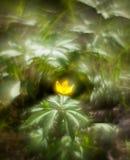 Fiore giallo della primavera su un fondo torto fantastico vago w fotografie stock