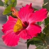 Fiore giallo di rosso della farfalla Fotografia Stock Libera da Diritti