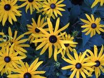 Fiore giallo e blu Fotografia Stock