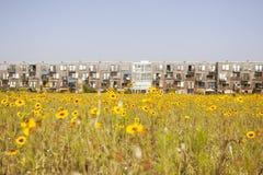 Fiore giallo ed alloggio olandese moderno Fotografie Stock