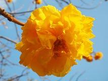 Fiore giallo esotico nel parco della città fotografia stock