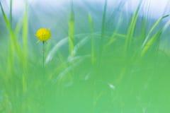 Fiore giallo fra le erbe verdi Fotografia Stock Libera da Diritti