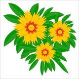 Fiore giallo grandiflora di Coreopsis Immagini Stock