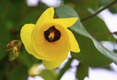 Fiore giallo meravigliosamente che fiorisce Immagine Stock