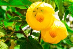 Fiore giallo nel parco fotografia stock libera da diritti