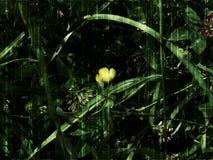 Fiore giallo nell'erba verde Fotografia Stock Libera da Diritti