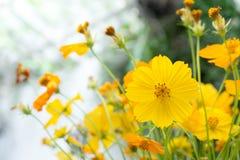 Fiore giallo nella serra Immagini Stock Libere da Diritti