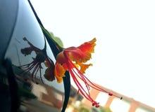 Fiore giallo rosso Fotografie Stock