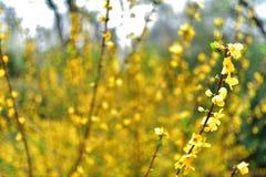 Fiore giallo selvaggio sbocciato con fondo vago completo fotografia stock