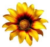 Fiore giallo soleggiato Fotografia Stock Libera da Diritti