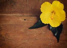 Fiore giallo su fondo di legno Immagini Stock