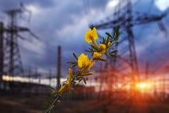 Fiore giallo sul fondo di tramonto con le linee ad alta tensione Immagini Stock Libere da Diritti