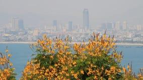 Fiore giallo sulla spiaggia stock footage