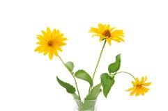 Fiore giallo tre Immagine Stock Libera da Diritti