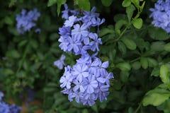 Fiore in giardino immagini stock libere da diritti
