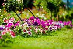 Fiore in giardino Fotografie Stock Libere da Diritti