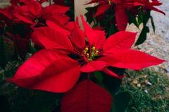 Fiore in giardino fotografia stock libera da diritti