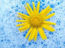 Fiore in gomma piuma Fotografie Stock Libere da Diritti