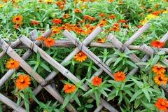Fiore in gruppo di terminali Immagine Stock