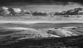 Fiore Heather Upland in colline dello Shropshire, Regno Unito fotografie stock