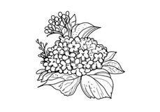 Fiore hydrangea Coloritura per gli adulti fotografia stock libera da diritti