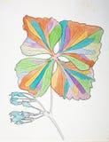Fiore illustrato in pitture variopinte su bianco Immagini Stock