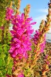 Fiore incredibile dal lago fotografie stock libere da diritti