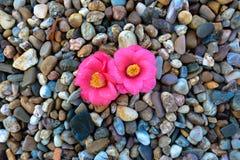 Fiore intenso immagini stock libere da diritti